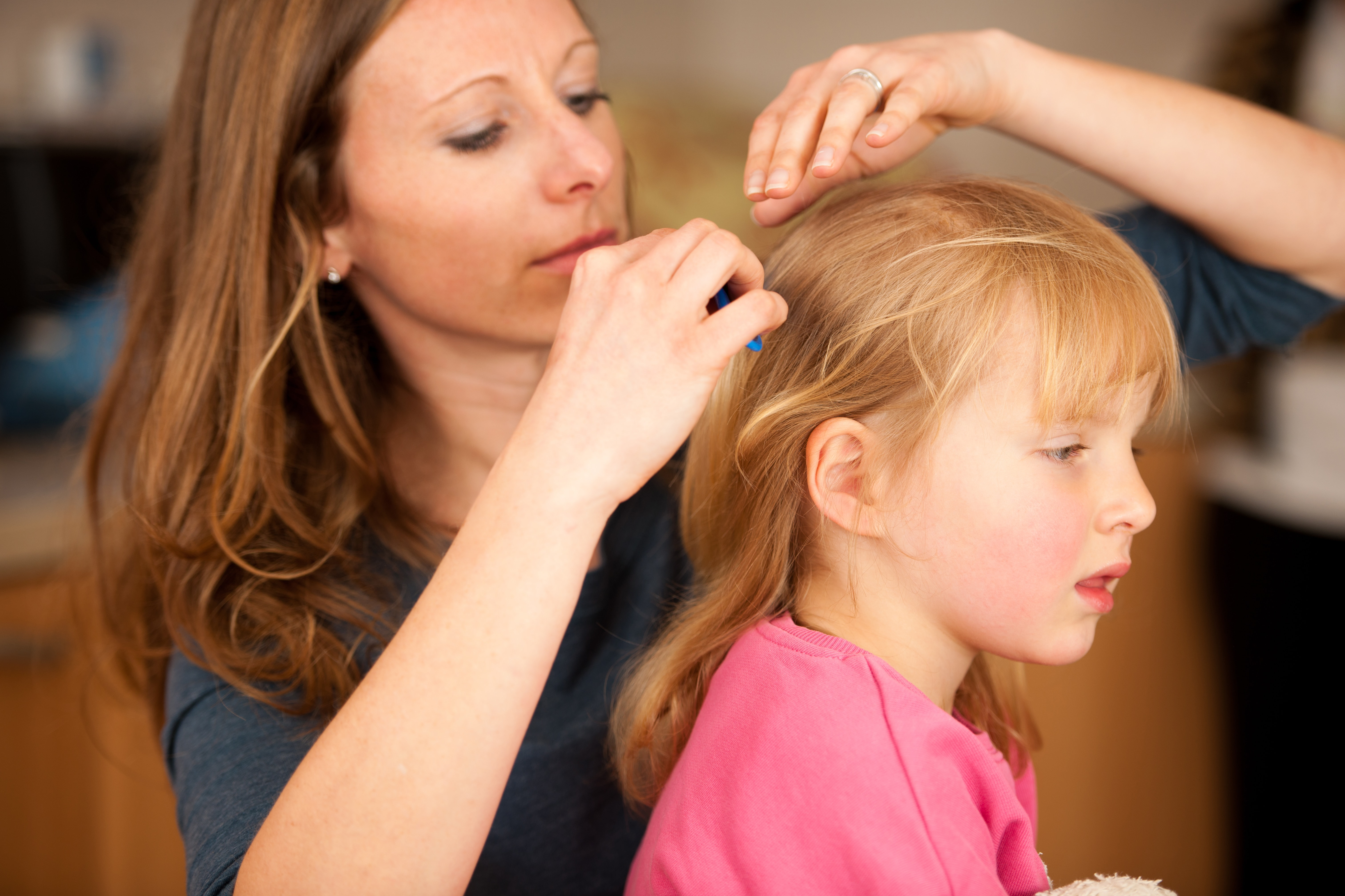 head lice information for parents